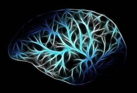 Нейропластичность, также известная как пластичность мозга, нейроэластичность или нейронная пластичность, - это способность мозга непрерывно изменяться в течение всей жизни человека