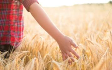 Целиакия вызывается реакцией на клейковину, то есть, на различные белки, содержащиеся в пшенице и других зерновых культурах, таких как ячмень и рожь.