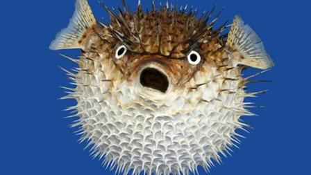 Тетродотоксин - яд, который содержится в некоторых видах рыб, в тч рыбе фугу