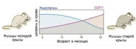 Фактор  дифференциации роста-11 (GDF11), также известный как костный морфогенетический белок 11 (BMP-11), представляет собой белок, который у человека кодируется геном фактора дифференциации роста 11.