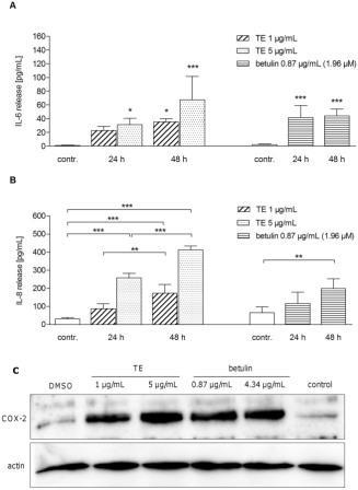 Рис. 4. ТЕ и бетулин (Бет) усиливают высвобождение Ил-6 (A) и Ил-8 (B), а также образование белка ЦОГ-2 (C) в первичных кератиноцитах человека. Измерение высвобождения Ил-6 (A) и Ил-8 (B) в ответ на TE (1 и 5 мкг/мл) и бетулин (0,87 мкг/мл, что составляет 1 мкг/мл TE), измеренное методом ELISA. Значения представляют собой данные, как минимум, трех независимых экспериментов ± s.d. (*p<0.05, **p<0.01 and ***p<0.001, по сравнению с контролем). (С) белок ЦОГ-2 измеряли с помощью Вестерн-блот анализа через 24 ч после обработки ТЕ (1 и 5 мкг / мл) и соответствующей концентрации бетулина (0,87 и 4,34 мкг/мл). DMSO (0.1%, объём/ объём) служило как растворяющий контроль. Показано репрезентативный вестерн блот, n = 3.