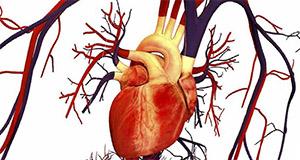 7-Кето ДГЭА и сердечно-сосудистые заболевания