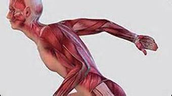 Один из типов астении - нервно-мышечная усталость