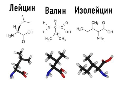 Аминокислота с разветвленной цепью (BCAA) представляет собой аминокислоту, имеющую алифатическую боковую цепь с разветвлением (центральный атом углерода связан с тремя или более атомами углерода). Среди протеиногенных аминокислот есть три BCAA: [[лейцин]], [[изолейцин]] и [[валин]].