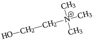Взаимодействие бетаина (триметилглицина) с холином