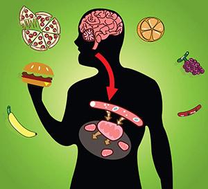 Влияние бетаина (триметилглицина) на метаболизм