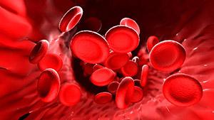 Брингарадж: холестерин и липиды