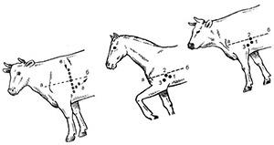 Влияние бромантана на сердечно-сосудистую и симпато-надпочечниковую системы у животных
