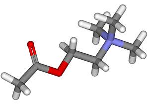 Бутея роскошная: ацетилхолин