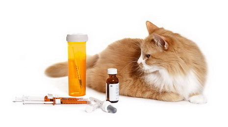 Эффекты плацебо у животных во многом обусловлены восприятием хозяина.