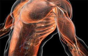 Черный тмин: клетки скелетной мускулатуры и выносливость