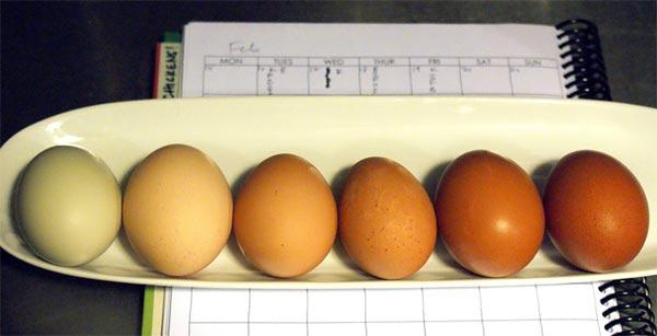 Яйца со скорлупой разного цвета