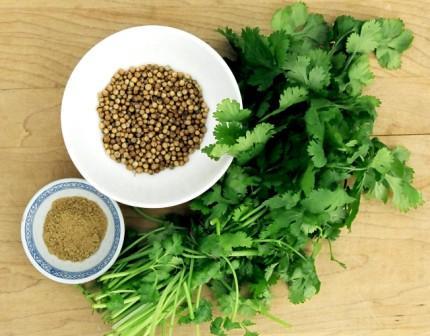 Кориандр, или китайская петрушка, является однолетней травой из семейства Apiaceae. Все части растения съедобны, но свежие листья и высушенные семена традиционно используются в кулинарии.