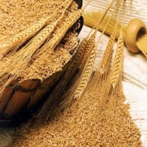 Клейковина, или глютен представляет собой смесь белков, содержащуюся в пшенице и зернах.