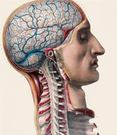Дислексия: нейроанатомия