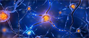 Древогубец метельчатый: нейрогенез