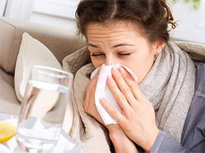 Использование эхинацеи против простуды