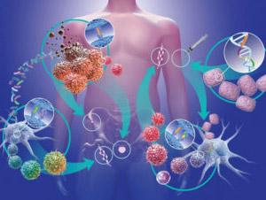Элеутерококк: иммунодепрессия, индуцированная физическими нагрузками