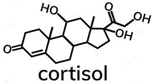 Эриоботрия: кортизол
