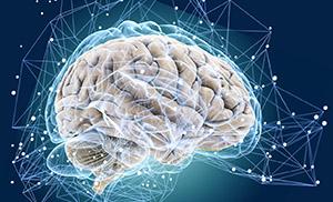Гамма-аминомасляная кислота (ГАМК): развитие мозга