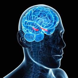 Гиперзин (Гуперзин) А: нейрогенез