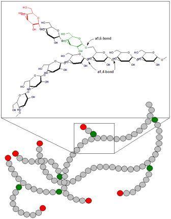 Строение гликогена