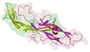 ХГЧ (хорионический гонадотропин человека)