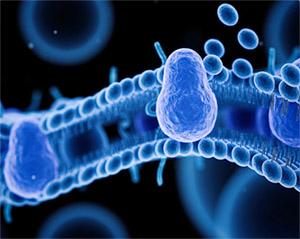 Кемпферия (Кемпферия мелкоцветковая): нейрозащита