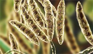 Коллоидное серебро: грибы и бактерии