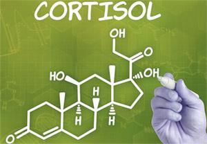 Леводопа (L-ДОФА): взаимодействие с кортизолом