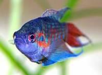 Рыба – это жаберные водные животные, имеющие череп, у которых нет конечностей с пальцами. Они образуют сестринскую группу с оболочниками.