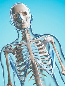 Магний: скелет и костная масса