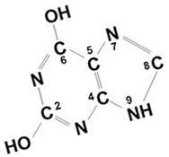 Мате содержит три ксантина: кофеин, теобромин и теофиллин