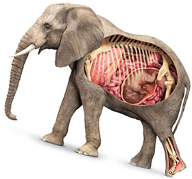 Менопауза: постепенное старение присуще всем плацентарным млекопитающим
