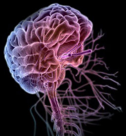 Клеточные и молекулярные действия метиленового синего в нервной системе