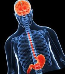 Хотя молозиво содержит значительное количество грелина, прием 20г молозива в течение двух недель до начала тренировочного теста не смог существенно повлиять на концентрации циркулирующего грелина, по сравнению с плацебо