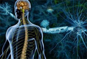 Нейрон: демиелинизация