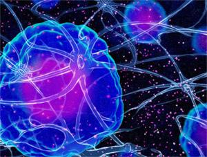 Нейроны «общаются» друг с другом через синапсы