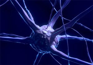 Нервная система: зеркальные нейроны