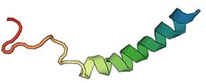 NPY (Нейропептид Y)