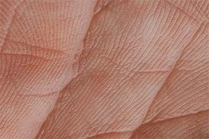 Пероральный прием пищевой добавки с содержанием экстракта Облепихи (50 мг/кг) ежедневно в течение шести недель облученными бестимусными мышами эффективно предотвращает изменения качества кожи, вызванные УФ-облучением, и образование морщин
