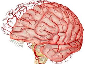 Октопамин: влияние на головные боли и кровоток