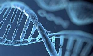 Пилоростеноз: генетика