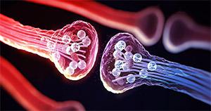 Пирролохинолинхинон: активация сигнальных молекул