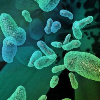 Пробиотики – это микроорганизмы, которые, предположительно, способны обеспечить преимущества для здоровья при потреблении.