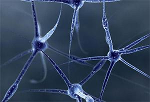 Модуляция GABA- и глицин-активируемых ионных токов семаксом в изолированных нейронах головного мозга