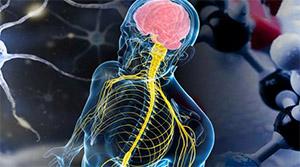 Синдром Кальмана: патофизиология