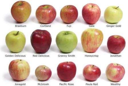 Некоторые сорта яблок
