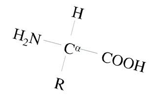 Общая структура аминокислот