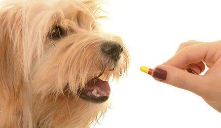 Действует ли плацебо на животных?